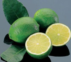 LIME - Tahitian Lime-Bearss - Lime